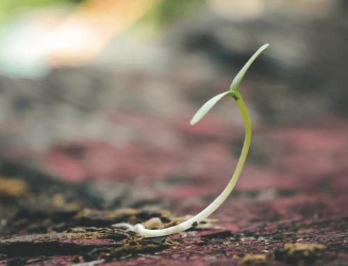El emperador y la semilla (Cuento filosófico)