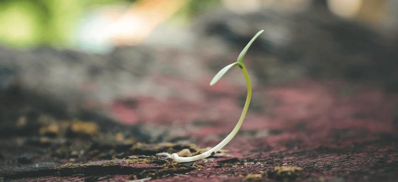 El emperador y la semilla