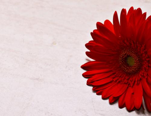 La flor roja con el tallo verde (Cuento filosófico)