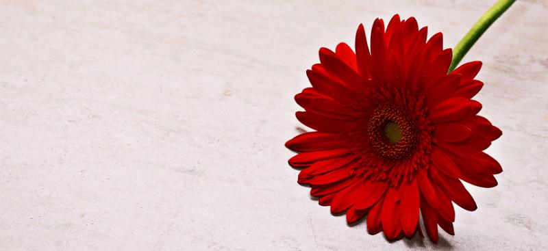 La flor roja con el tallo verde