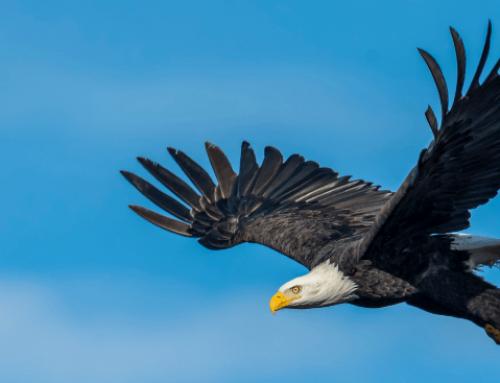 El águila y la gallina (Cuento filosófico)