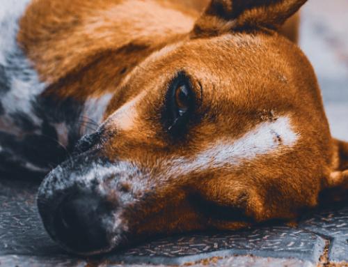 El perro y el clavo oxidado (Cuento filosófico)