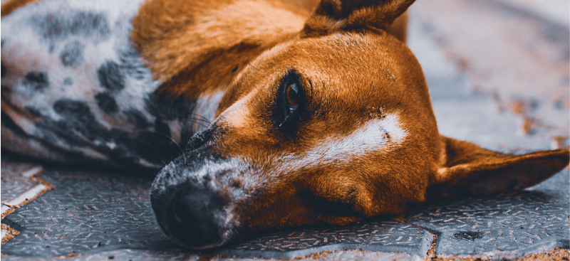 El perro y el clavo oxidado